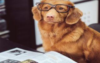 škola za pse
